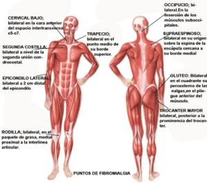 investigacion fibromialgia: