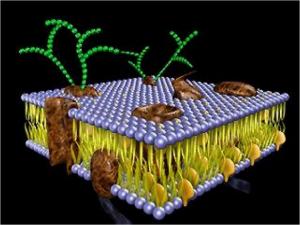 membrana_celular2