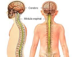 fluido-espinal-y-fatiga-cronica